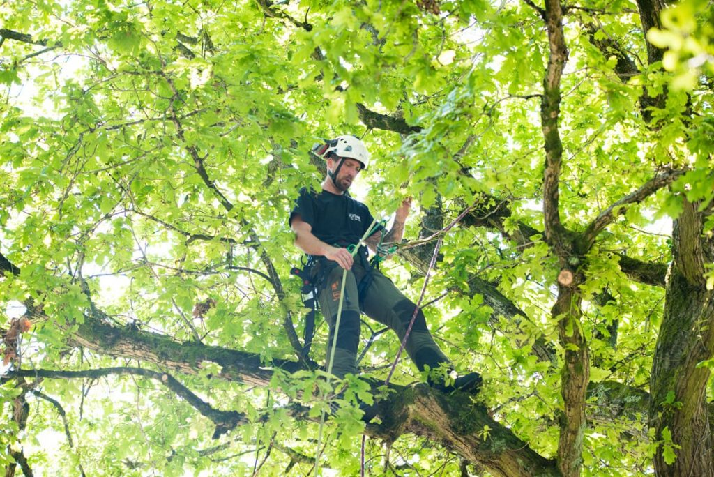 7 Top Most Qualities Of a Good Tree Removal Company