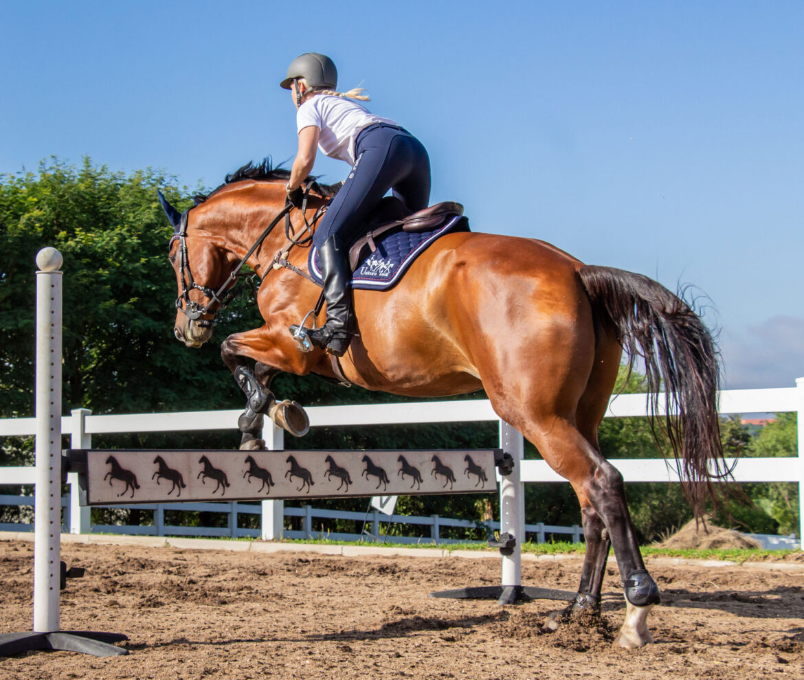 How Your Horse Jumps: A Small Guide