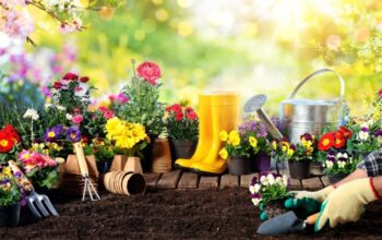 5 Tips for Choosing Landscaping Tools